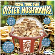Grow Your Own Oyster Mushrooms!