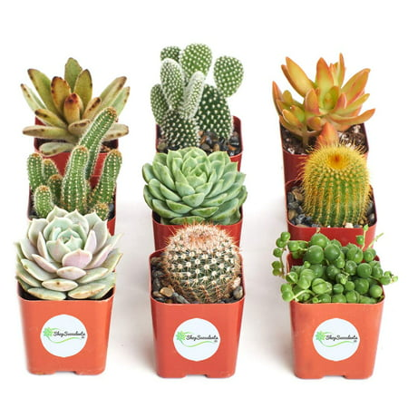 Home Botanicals Cactus and Succulent (Collection of 9) ()