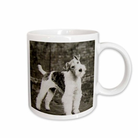3dRose Vintage Wire Hair Fox Terrier Dog Circa 1900 Edwardian Era - Ceramic Mug, 11-ounce