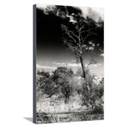 Awesome South Africa Collection B&W - African Landscape with Acacia Tree XIV Stretched Canvas Print Wall Art By Philippe Hugonnard