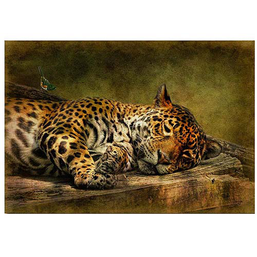 "Trademark Fine Art ""Wake Up Sleepyhead"" Canvas Art by Lois Bryan"
