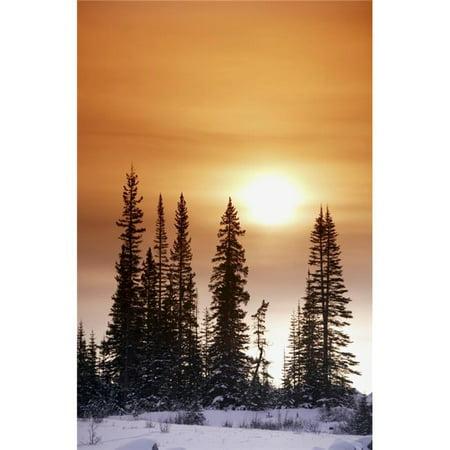 Posterazzi DPI1800697 Sun Shining On Trees Poster Print by Richard Wear, 11 x 17 - image 1 of 1