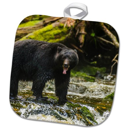 3dRose Canada, B.C., Inside Passage, Black bear with its tongue out. - Pot Holder, 8 by 8-inch