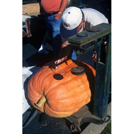 Giant Pumpkin Weigh-In, Pumpkin Festival, Morton, Illinois Print Wall Art - Halloween Festivals 2017 Illinois