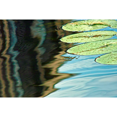 LAMINATED POSTER Seattle Lily Leaves Pond Water Lily Poster Print 24 x - Lilo Leaf
