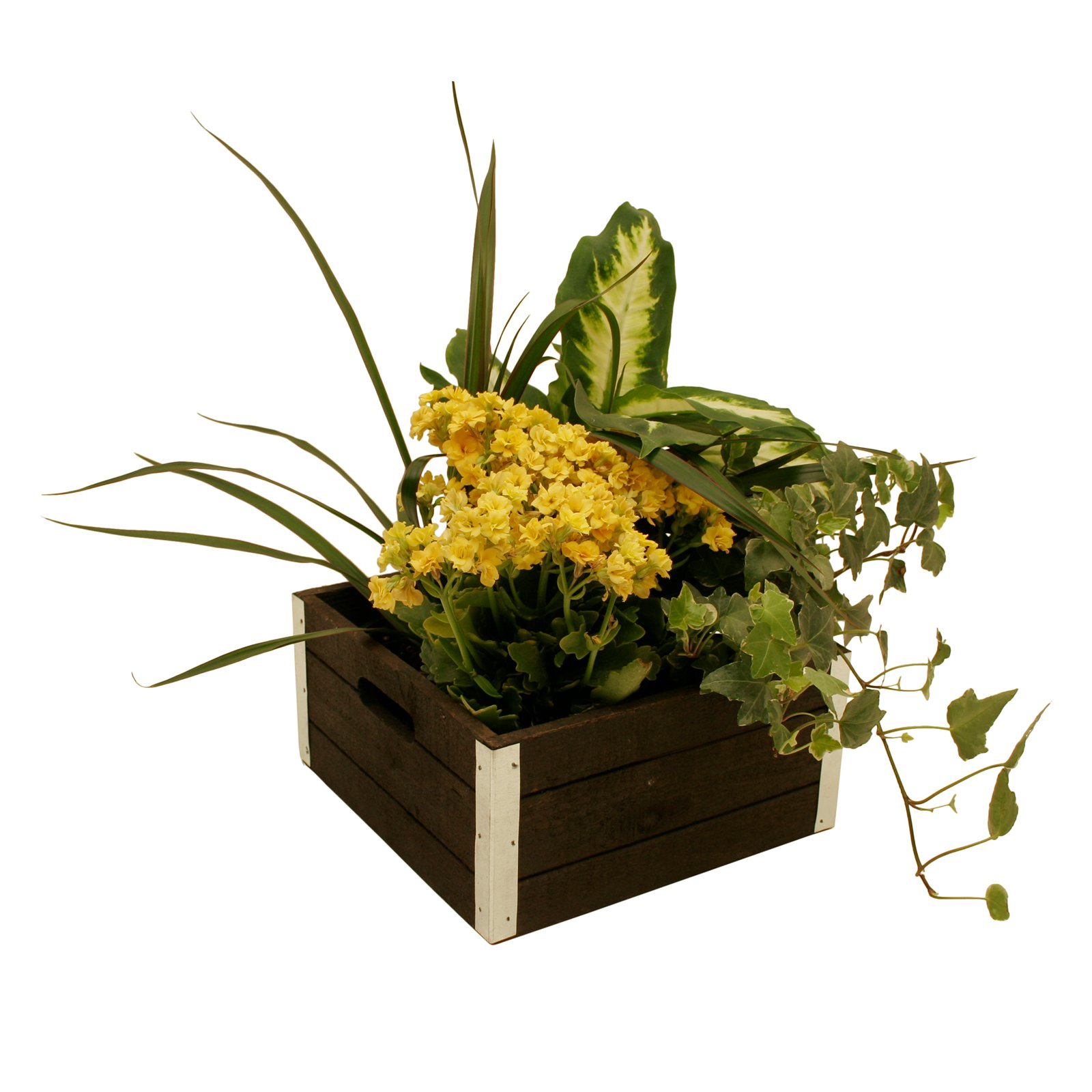 Wald Import Wood Crate Box -Set of 3