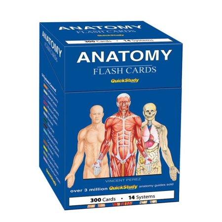 Anatomy Flash Cards - Walmart.com