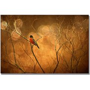 "Trademark Fine Art ""Robin In Shades Of Orange"" Canvas Wall Art by Lois Bryan"