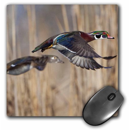 3Drose Usa  Washington State  Wood Duck  Male  Female  Flight   Us48 Glu0011   Gary Luhm  Mouse Pad  8 By 8 Inches