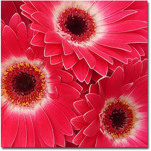 "Trademark Fine Art ""Magenta Gerbers"" Canvas Wall Art by Amy Vangsgard"
