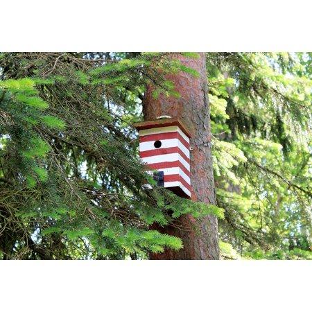 Peel N Stick Poster Of Red Box Birdhouse Bird Nest Pir Forest Gran Poster 24x16 Adhesive Sticker Poster Print
