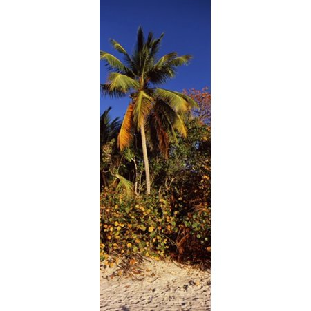 - Trees on the beach Cinnamon Bay Virgin Islands National Park St John US Virgin Islands Stretched Canvas - Panoramic Images (18 x 7)
