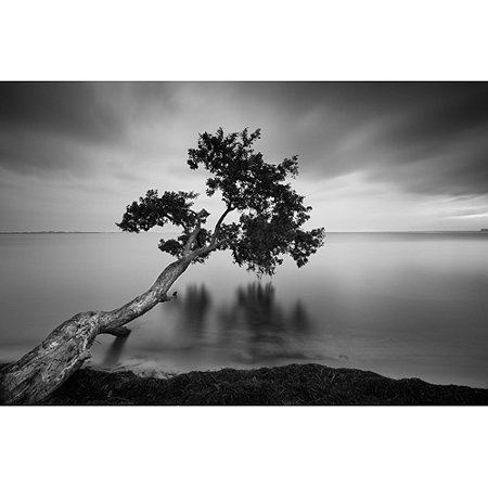 "24"" x 36"" Black and White Water Tree Canvas Wall Art ..."