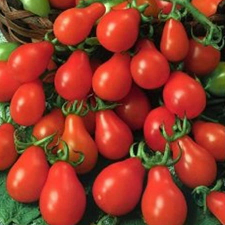 Tomato Garden Seeds - Red Pear - 1 Oz - Non-GMO, Heirloom, Vegetable Gardening (Red Pear Tomato)