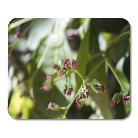 SIDONKU Corsage Bouquet Cashew Nut Flowers Anacardium Occidentale L Tree Mousepad Mouse Pad Mouse Mat 9x10 inch