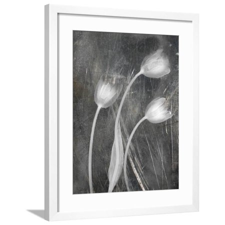 3 Tulipanes Con Red Bn Scratch Framed Print Wall Art By Moises Levy