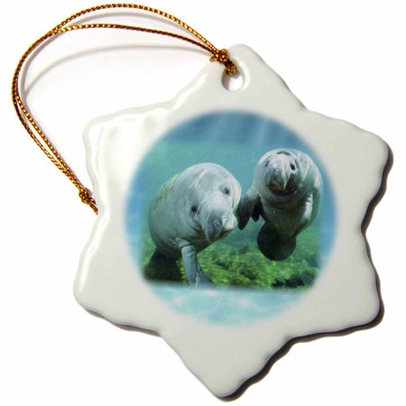 3dRose 2 Manatees looking At You - Snowflake Ornament, 3-inch ()