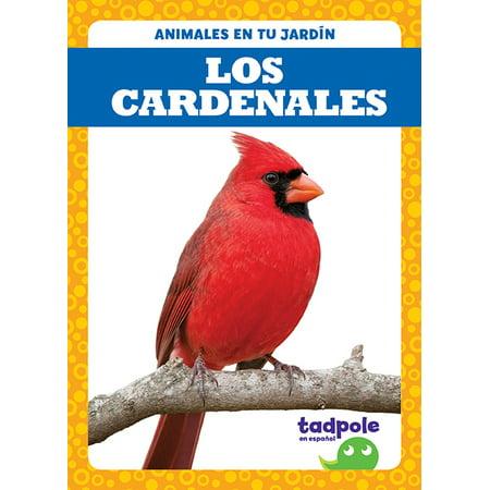 Animales En Tu Jardín: Los Cardenales (Cardinals) (Paperback) Cardinal Custom Showfile Display Books