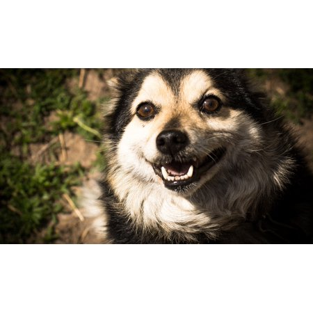 Canvas Print Pets Animals Man's Best Friend Dog View Eyes Stretched Canvas 10 x
