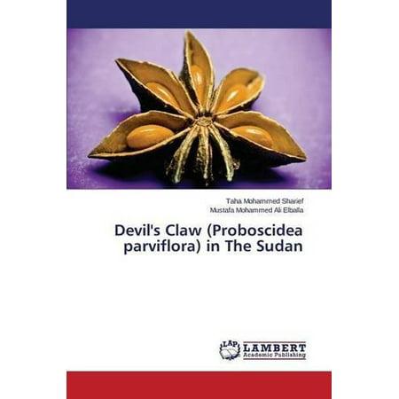 La griffe du diable (proboscidiens Parviflora) au Soudan