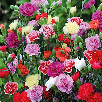 5-1000pcs Mixed Rose Daisy Carnation Bulbs Seeds Spring Flower Plant Home Garden