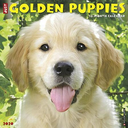 Willow Creek Press 2020 Just Golden Puppies Wall Calendar ()