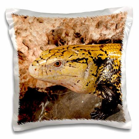 Lizard Pillow (3dRose Irian Jaya Blue Tongue Skink, Lizard, Irian Jaya - NA02 DNO0872 - David Northcott - Pillow Case, 16 by 16-inch )