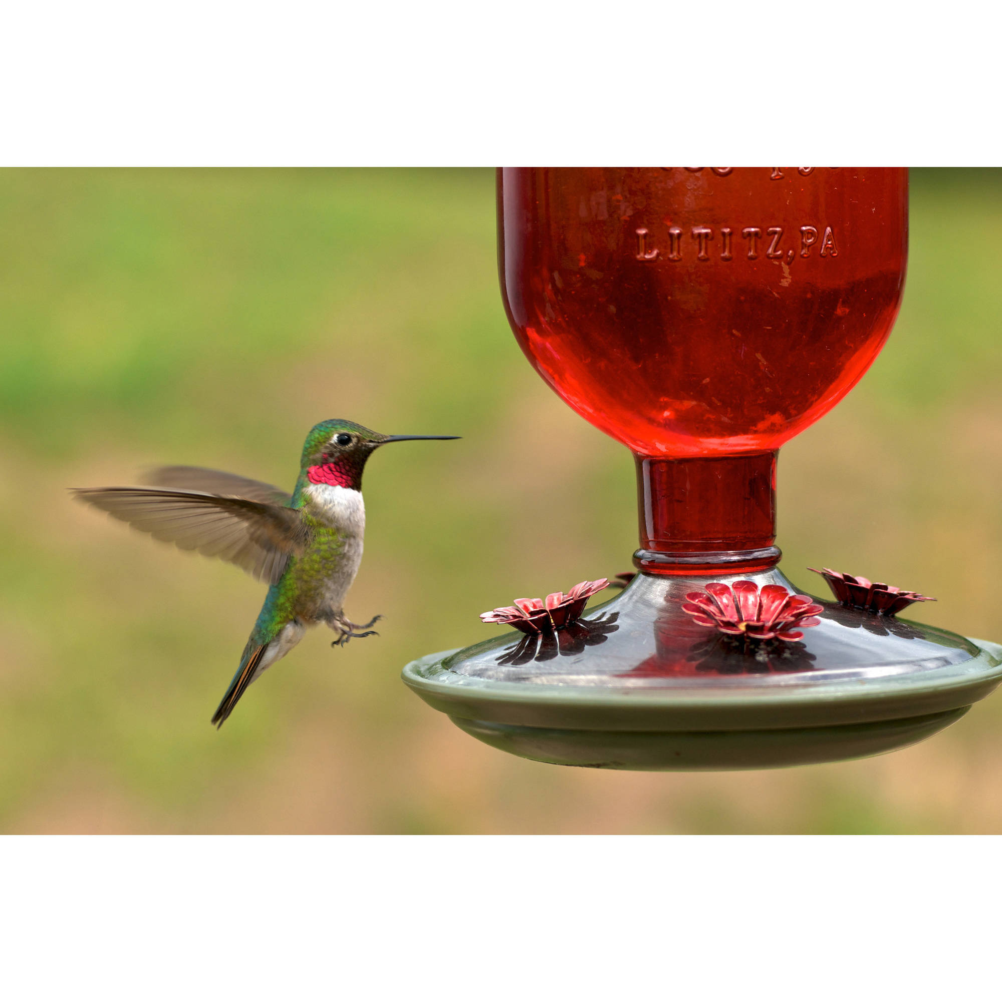 pennington com feeders walmart feeder glass oz hummingbird ip decorative