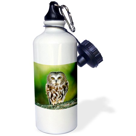 3dRose Colorado. Northern saw-whet owl - US06 BJA0052 - Jaynes Gallery, Sports Water Bottle, 21oz