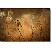 "Trademark Fine Art ""The Robin"" Canvas Wall Art by Lois Bryan"