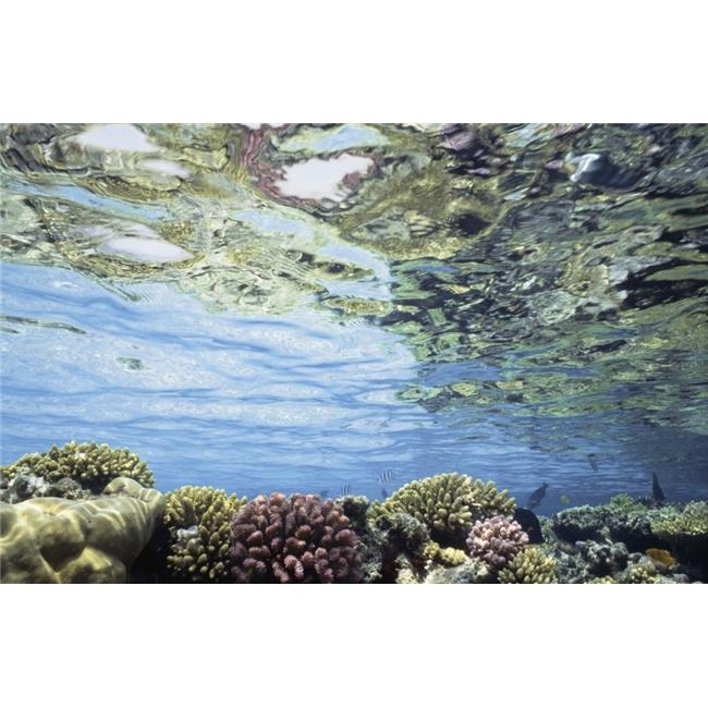 View of Coral In Shallow Waters Poster Print, 34 x 22 - Large - image 1 of 1