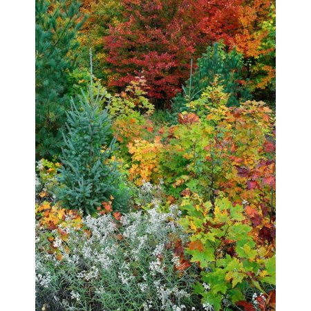 Autumn colors Killarney Provincial Park Ontario Canada Poster Print by Tim