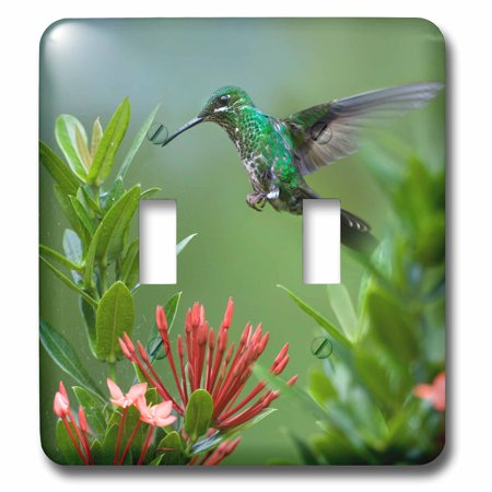 Humminbird Switch - 3dRose Female Green-crowned brilliant hummingbird, Heliodoxa jacula. - Double Toggle Switch