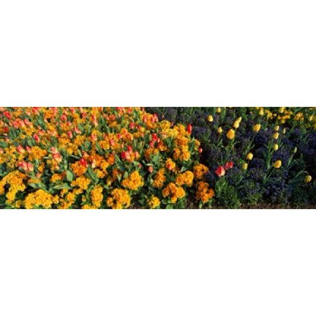 Hyde Park Halloween Austin (Flowers in Hyde Park City of Westminster London England Canvas Art - Panoramic Images (18 x)