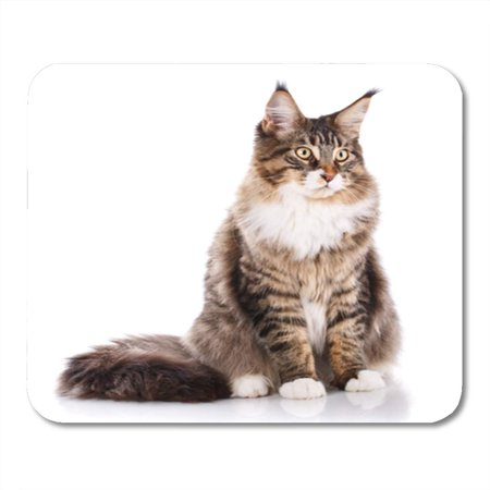 SIDONKU Adorable Portrait of Maine Coon Cat 6 Months Old Sitting in Front White Mousepad Mouse Pad Mouse Mat 9x10