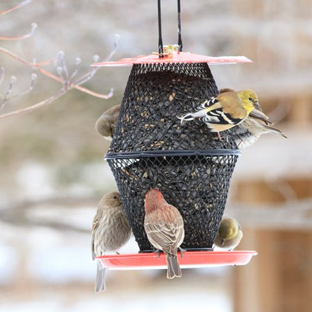 NO/NO Sunflower Seed Red Lantern Wild Bird Feeder