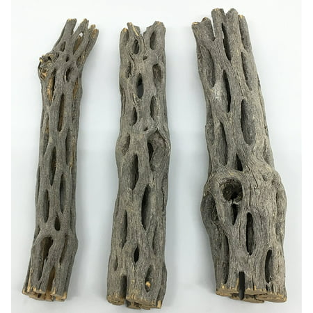 "- Natural Cholla / Choya Wood 3 Pieces 6"" for Shrimp habitat and food treat Hermit Crabs Plecos Aquarium Decoration Lowers pH Hideouts and Chew Toys Reptiles Thorn Free Dried Organic Awesome Aquatics"
