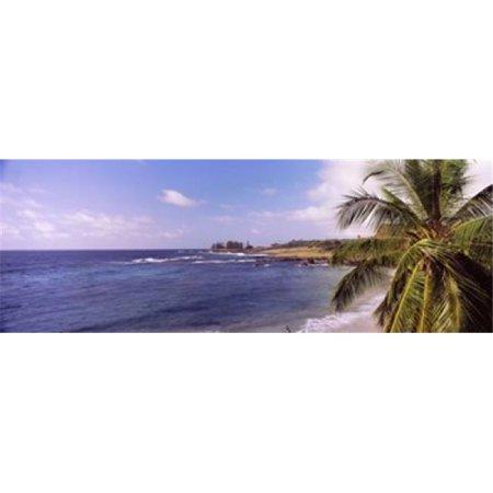 Images panoramiques PPI134523L Palmier sur la plage hamoa Plage Hana Maui, Hawaii, USA copie d'affiche par images panoramiques - 36 x 12 - image 1 de 1