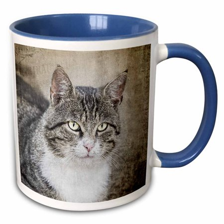 3dRose Close up of cute cat photography - Two Tone Blue Mug,