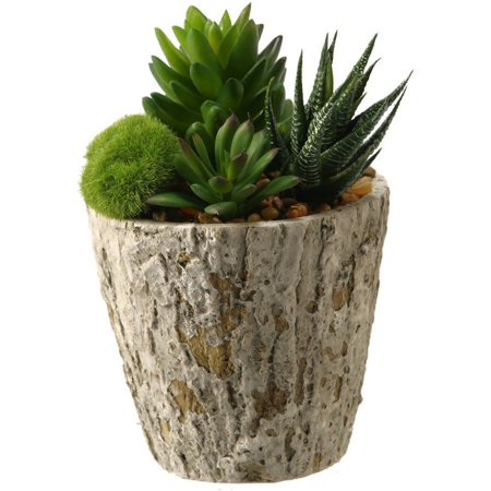 D&W Silks Aloe and Succulents in Weathered Oak Look Cement Planter