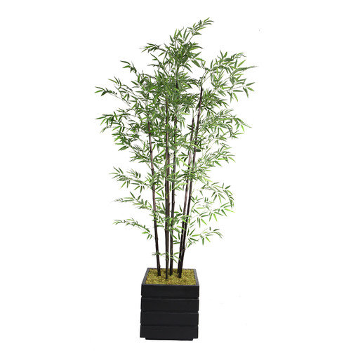 78-in Tall Natural Bamboo Tree in 14-in Fiberstone Planter