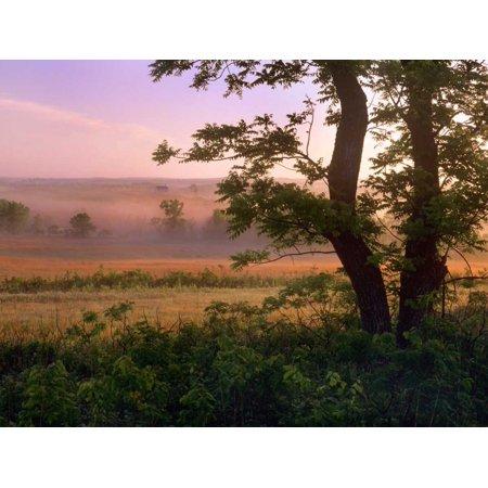 Kansas Prairie Flowers (Tallgrass Prairie National Preserve Kansas Poster Print by Tim)