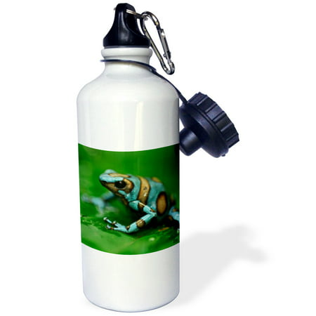 - 3dRose Blue n brown tree frog on a leaf, Sports Water Bottle, 21oz