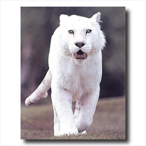 AWESOME Solid White Tiger Wall Picture Art Print