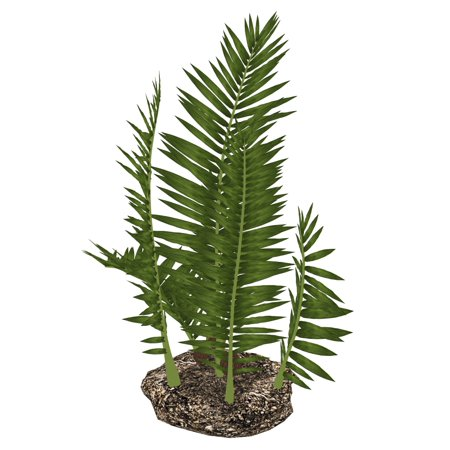 Nipa burtinii prehistoric plant isolated on white background Poster Print