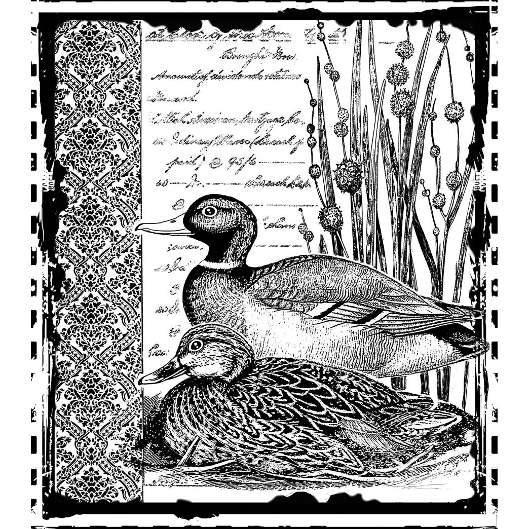"""Crafty Individuals Unmounted Rubber Stamp 4.75""""X7"""" Pkg-Mallard Duck Pair"""