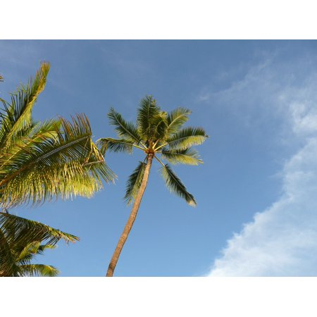 LAMINATED POSTER Tree Trunk Organic Palm Agriculture Leaves Hawaii Poster Print 24 x 36 ()