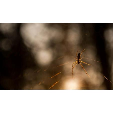 Canvas Print Spider Web Dawn Light Trees Sun Insects Spider Stretched Canvas 10 x 14](Spider Web Lights)