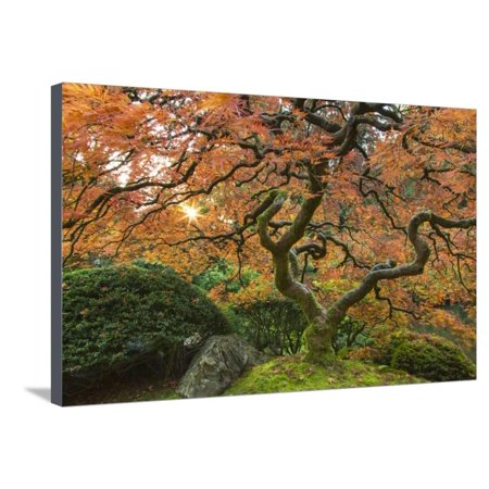 Maple tree at the Japanese Gardens in autumn in Portland, Oregon, USA Stretched Canvas Print Wall Art By Chuck Haney](Halloween Stores In Portland)