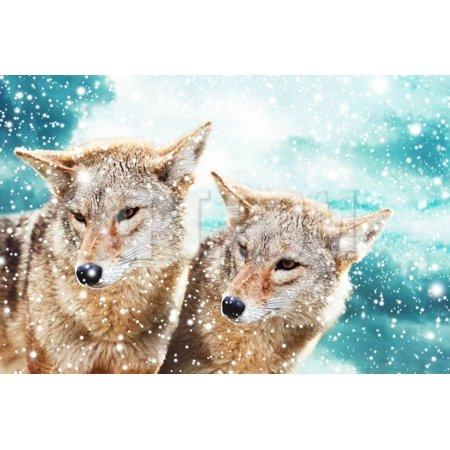 Coyote Pair Print Wall Art By igor stevanovic ()
